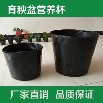 整袋批发优质黑色塑料营养钵 育苗盆 育秧盆营养杯